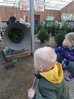 Kerstboom uitzoeken